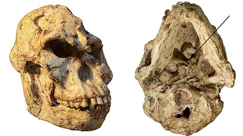 Little Foot had a bone in her skull that allowed her to move her head differently to modern humans.