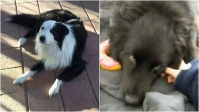 Police hunt woman who 'poisoned' dogs