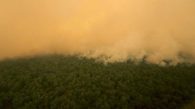 Tens of thousands of hectares of forest have been set alight to make way for palm oil plantations, of which Indonesia is the world's largest producer.
