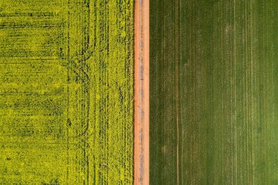 Aerial overlooking the canola fields in Sebastapol.