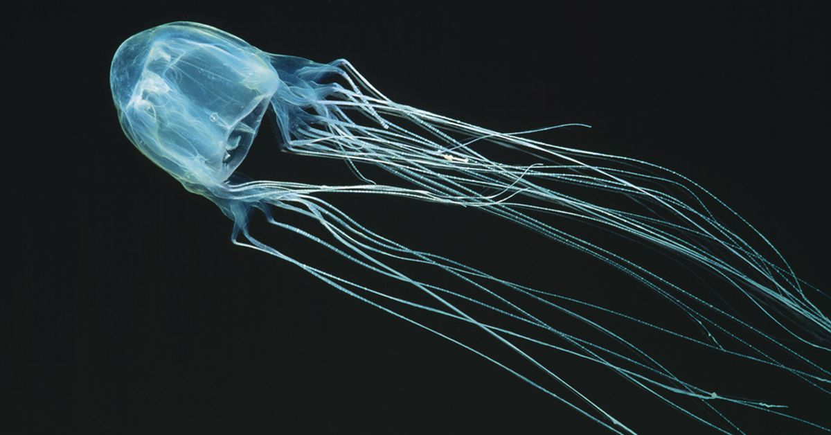 Teenage boy dies from box jellyfish sting in Far North Queensland – 9News