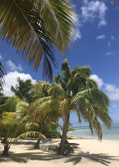 1.When was your first visit to the Q: Cook Islands and how many times have you been back?