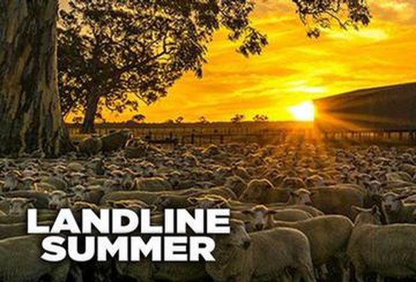 Landline Summer