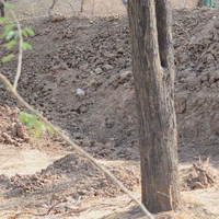 Can you spot the leopard in this photo?
