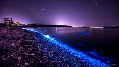 <p> It is not known why the plankton illuminates when disturbed. </p> <p> </p>