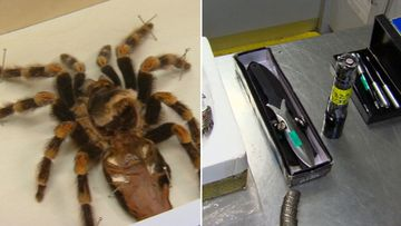 From spiders to whale meat: What's being sneaked into Australia