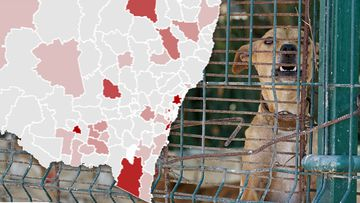 There were more than 4000 dog attacks across NSW in the last year.