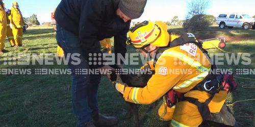 The 12-month-old was happily reunited with his owner, Paul. Picture: 9NEWS