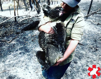The crew have been working since December to help injured and displaced koalas.