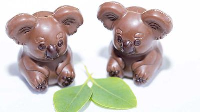 """Chocolate koalas aren't just an Aussie twist on the usual Easter themes, they also go to help a good cause. Wild Life Sydney Zoo&nbsp;has teamed up with the boutique chocolate maker Oh! Boo to offer these cute little chocolate mouthfuls, and money from the treats goes towards conservation, protection and research into koala habitats. But we wouldn't suggest them as an Easter treat if they didn't taste darn good too. &nbsp; &nbsp; &nbsp;<br /> <br /> The koala-ty chocolates are available at both <a href=""""Wild Life Sydney Zoo"""" target=""""_top"""" draggable=""""false"""">Wild Life Sydney Zoo</a> and <a href=""""http://ohboo.com.au/"""" target=""""_top"""" draggable=""""false"""">Oh! Boo</a><br /> &nbsp;<br /> RRP - $9.95 for a box of four."""