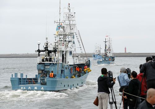Ships depart from Kushiro port in Hokkaido on July 1, 2019, for Japan's first commercial whaling operation in 31 years, after the country's withdrawal from the International Whaling Commission.