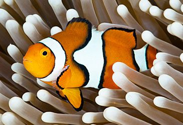 Daily Quiz: Which body of water is home to the Great Barrier Reef?