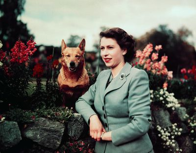 A portrait of Queen Elizabeth in 1953, aged 27 years.
