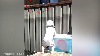 A toddler plays with a snake just inches above his head. Click through to see more snakes where they definitely shouldn't be.