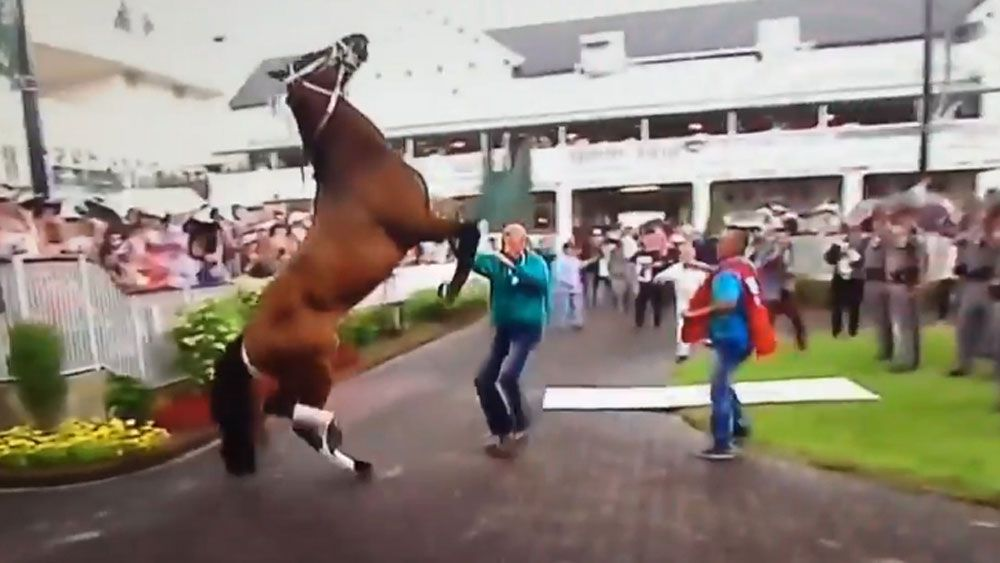 Racehorse scratched after struck by storm debris