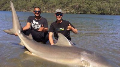Fishermen haul 3.5m, 150kg bull shark from Sydney river