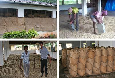 Monsooned Malabar coffee