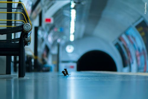 This striking image of mice scrapping in a subway tunnel has won His image, Station Squabble, is the recipient of the Wildlife Photographer of the Year LUMIX People's Choice Award.