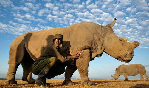 Rhino caretaker Mohammed Doyo caresses one of two surviving female northern white rhinos, Najin, at Ol Pejeta Conservancy near Nanyuki, 200kmd north of Nairobi.