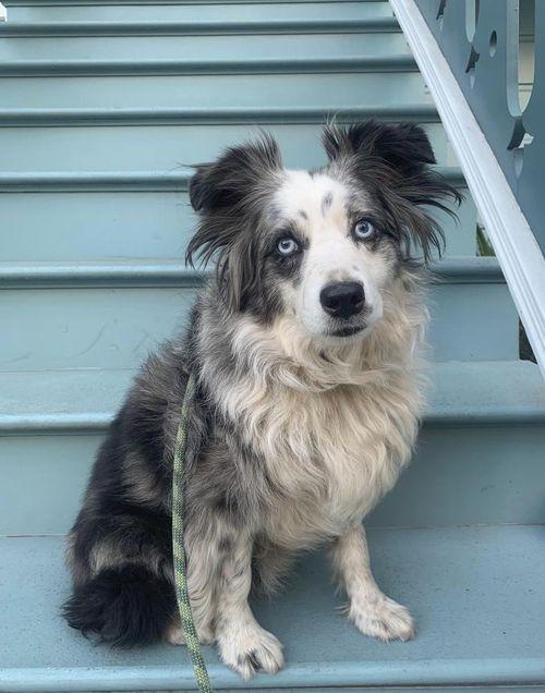 San Francisco woman offering $7,000 reward to find her stolen dog