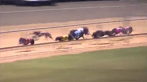 The duck flies directly in the path of the racing greyhound (Image: YouTube/SA Race Replays)