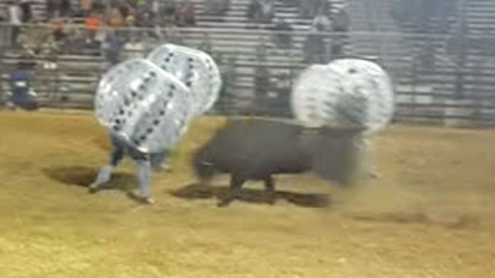 Bull charges at crazy competitors in strange game