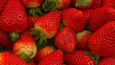 SA community vows to back strawberry growers