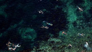 An aerial image shows swimmers at Clovelly Beach located in Sydney.