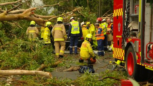 A man was killed after a tree fell on a car in Emu Plains. (9NEWS)