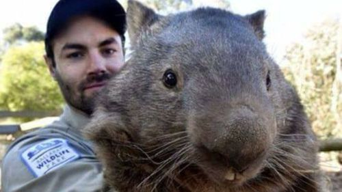The wombat died aged 31, the equivalent to 103 human years. (Facebook)