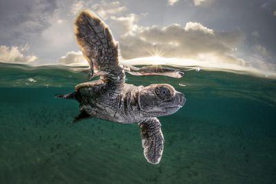 2021 Ocean Photography Awards - Third prize