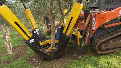 Ever wondered how they extracted an olive tree from the ground? Nope? Me neither, but now we both know.