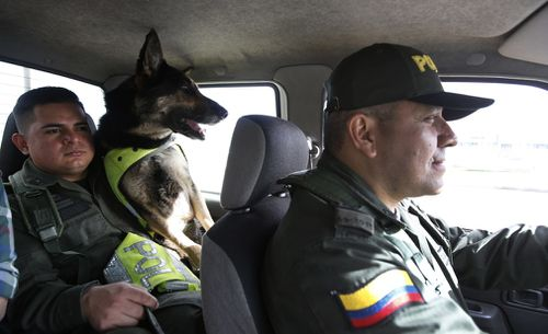 After her six-hour shift is over, Sombra is transported in a van with tinted windows back to her kennel. She is usually accompanied by two armed guards. Picture: EPA