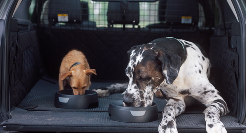 The Land Rover Pet Pack has spill-proof water bowls to keep your pets hydrated while in the car.