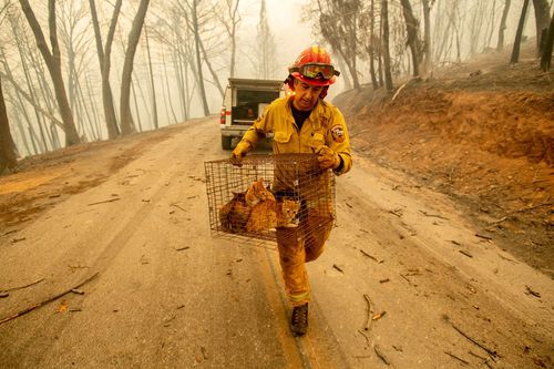 """Trump's tweet blaming """"gross mismanagement"""" for the devastating fires has angered numerous people throughout California as firefighters work tirelessly to contain the blazes."""