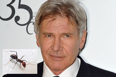 Pheidole harrisonfordi is a species of ant named after Harrison Ford in honour of his work in conservation.