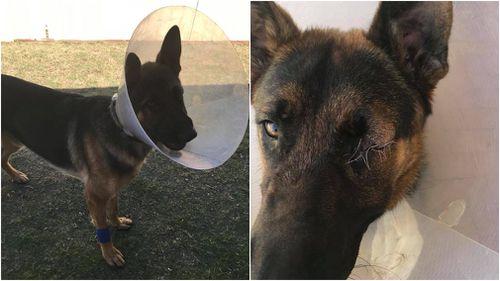 Man and dog 'attacked with baseball bat' during walk
