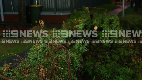 A an uprooted tree in Blacktown following last night's storm. (9NEWS)