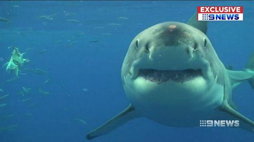 Shark attack wetsuit research Flinders University
