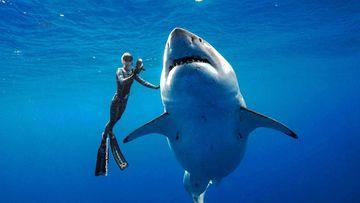Biggest white shark ever captured on video