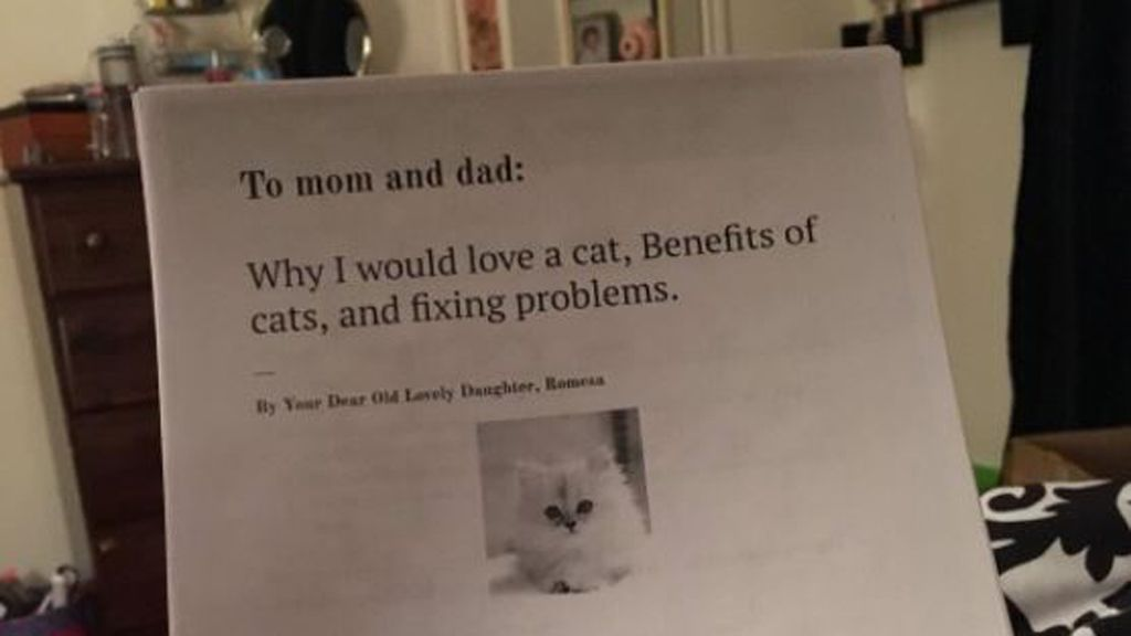 year old writes six page essay to convince parents she needs a cat dear mum and dad a little girl s plea goes viral image