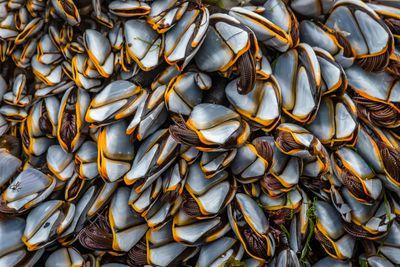 Close to Nature winner: Goose Barnacles (Goose Barnacles), Sanna Bay, Highland
