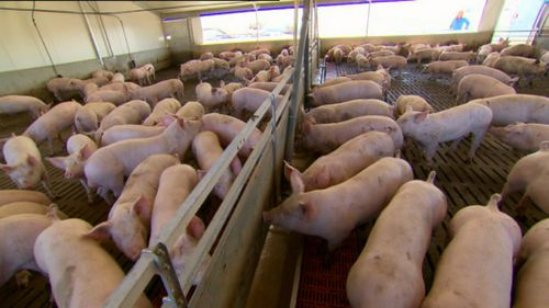 It's likely pork and ham prices will increase in the new year.