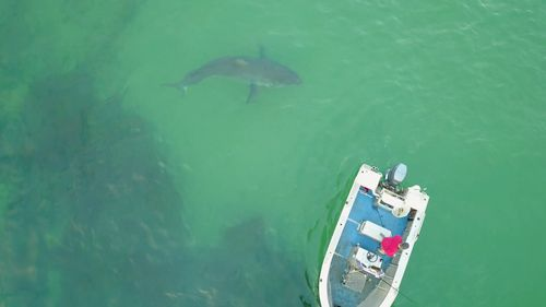 A huge great white circled a small boat off the coast.