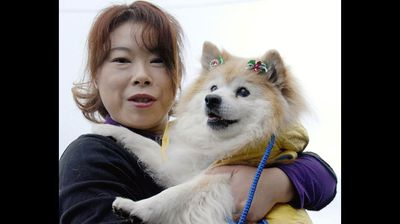 Pusuke (pictured), a Shiba Inu mix from Japan, was the oldest living dog, according to Guinness. But the mutt died in 2011 at the grand old age of 26, leaving the title in dispute. A 29-year-old terrier from the US named Max later claimed the title (but died aged 29 in 2013). A Polish mutt named Minius, believed to be more than 29 years old, (Yomiuri Shimbun/AFP/Getty Images)