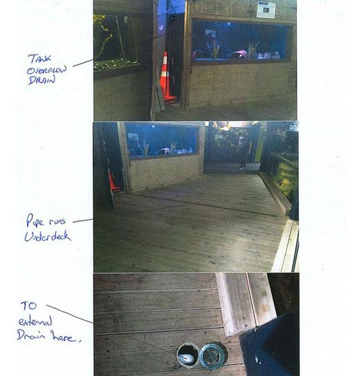 A series of photos released by the aquarium detailing Inky's possible escape. (New Zealand National Aquarium)