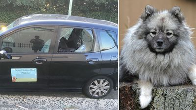 Owner finds pet dead in dogwalker's locked hot car