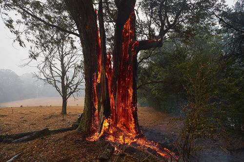 A tree burns from the inside out hours after the fire front had passed in Bundanoon, NSW.