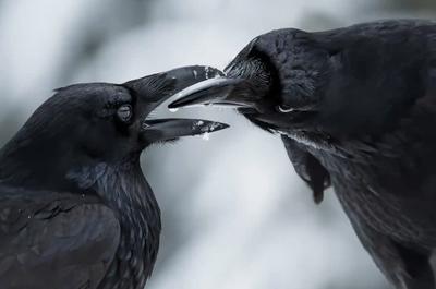 'The intimate touch'. Winner - Behaviour: Birds.