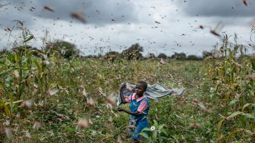 "Locusts, COVID-19 and deadly flooding pose a ""triple threat"" to millions of people across East Africa"